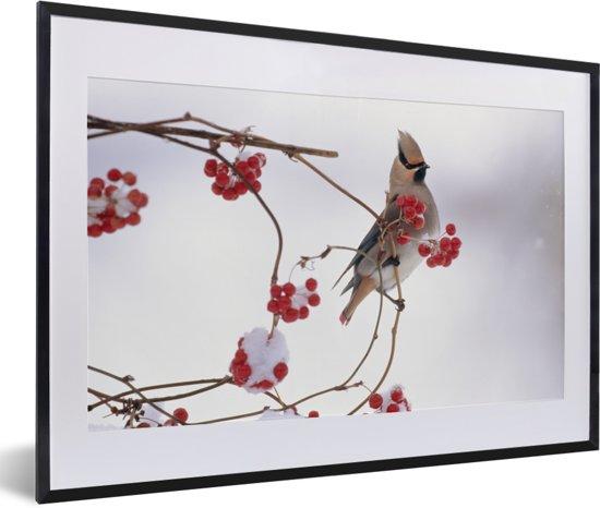 Foto in lijst - Japanse pestvogel op een tak met rode bessen fotolijst zwart met witte passe-partout 60x40 cm - Poster in lijst (Wanddecoratie woonkamer / slaapkamer)