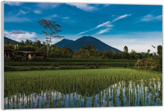 Plexiglas –Aziatisch Rijstveld– 60x40cm (Wanddecoratie van Plexiglas)
