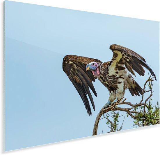 Oorgier klaar om weg te vliegen Plexiglas 120x80 cm - Foto print op Glas (Plexiglas wanddecoratie)