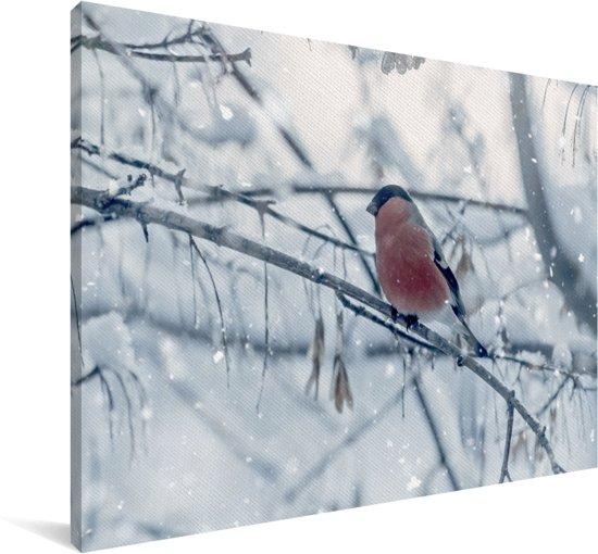 Goudvink met een rode borst op een tak Canvas 60x40 cm - Foto print op Canvas schilderij (Wanddecoratie woonkamer / slaapkamer)