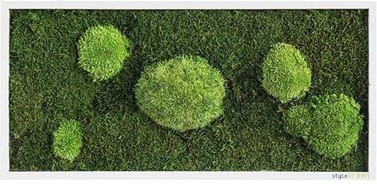 Verticale tuin - Flate & Pole moss - 57 x 27cm