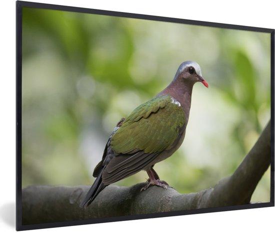 Foto in lijst - Groene smaragdduif zit in een boom fotolijst zwart 60x40 cm - Poster in lijst (Wanddecoratie woonkamer / slaapkamer)