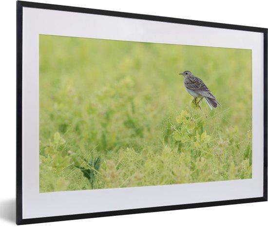 Foto in lijst - Veldleeuwerik in groene omgeving fotolijst zwart met witte passe-partout 60x40 cm - Poster in lijst (Wanddecoratie woonkamer / slaapkamer)