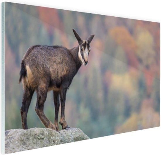 Geit op een rots  Glas 30x20 cm - Foto print op Glas (Plexiglas wanddecoratie)