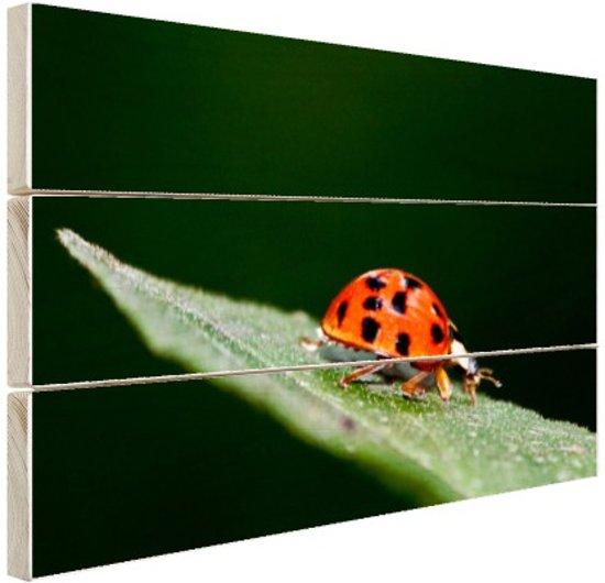 FotoCadeau.nl - Macrofoto van een liebeheersbeestje Hout 30x20 cm - Foto print op Hout (Wanddecoratie)
