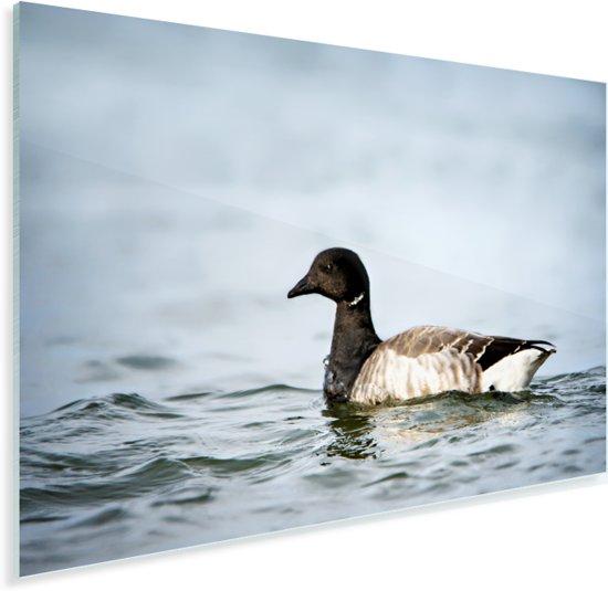Rotgans in het water tijdens de schemering Plexiglas 30x20 cm - klein - Foto print op Glas (Plexiglas wanddecoratie)