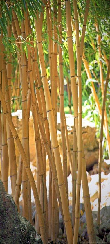 Fotobehang, Deurposter, Bamboe, Natuur, 90 x 200 cm. Art. 97512
