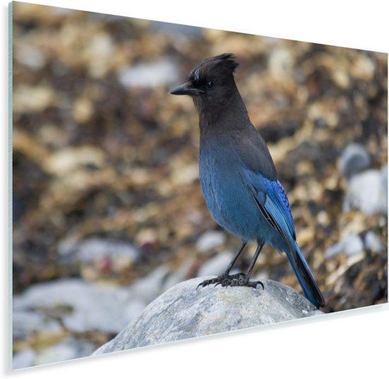 Een gaai zittend op een steen Plexiglas 90x60 cm - Foto print op Glas (Plexiglas wanddecoratie)