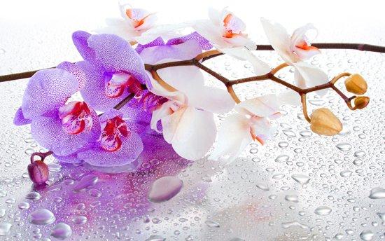 Violet   White Photomural, wallcovering