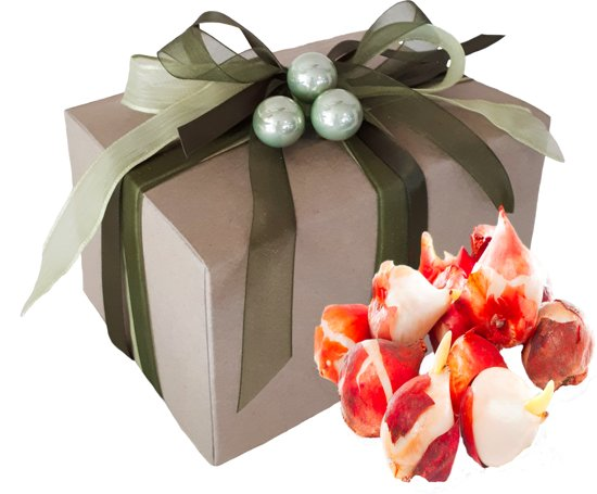 10 Tulpenbollen In Cadeauverpakking