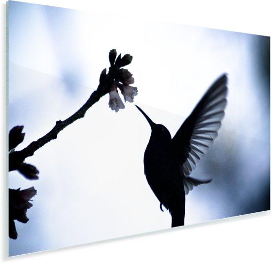 Zwart-wit afbeelding van een Kolibrie zwevend met wijd gespreide vleugels Plexiglas 120x80 cm - Foto print op Glas (Plexiglas wanddecoratie)