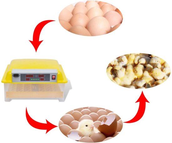Broedmachine automatisch voor 48 kippeneieren