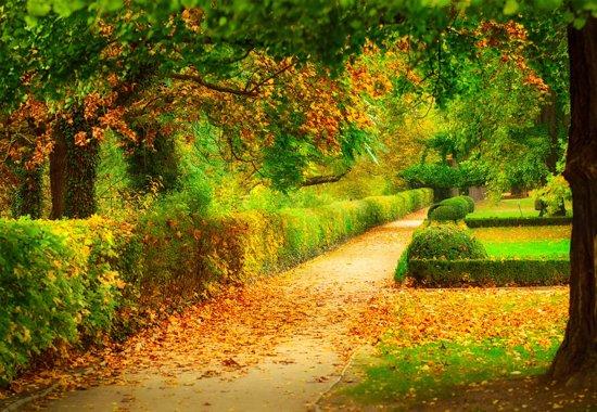 Fotobehang Autumn Garden|V8 - 368cm x 254cm|Premium Non-Woven Vlies 130gsm