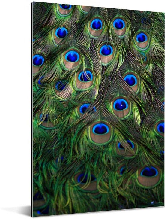 De fascinerende verenvacht van een groene pauw Aluminium 20x30 cm - klein - Foto print op Aluminium (metaal wanddecoratie)