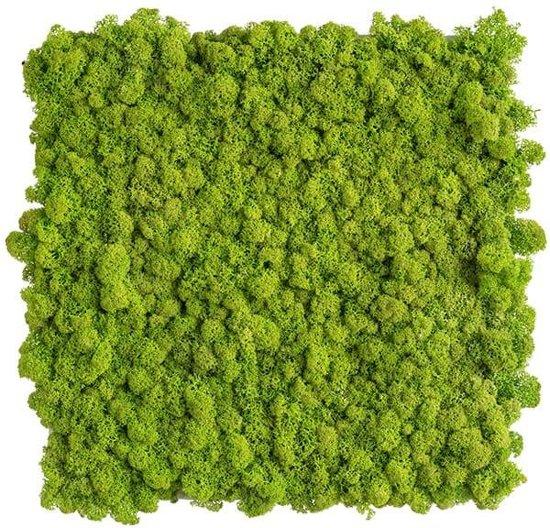 reindeer moss picture 35 x 35 CM voorjaar