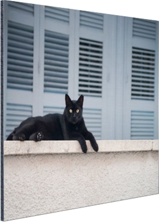 Zwarte kat aan het rusten Aluminium 120x80 cm - Foto print op Aluminium (metaal wanddecoratie)
