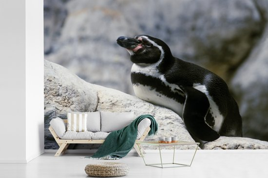 Fotobehang vinyl - Humboldtpinguïn ligt op een rots breedte 450 cm x hoogte 300 cm - Foto print op behang (in 7 formaten beschikbaar)