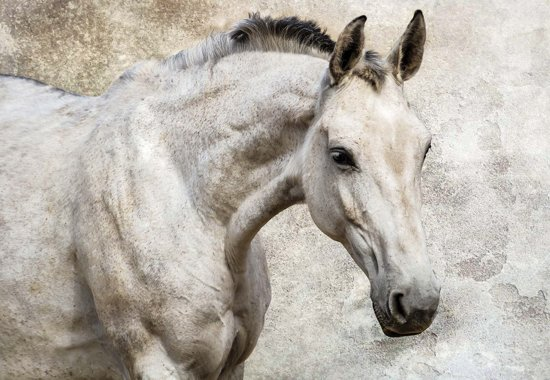 Fotobehang Horse Pony | XXL - 312cm x 219cm | 130g/m2 Vlies