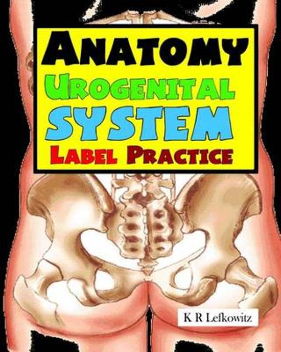 Bol Anatomy Urogenital System Label Practice K R Lefkowitz