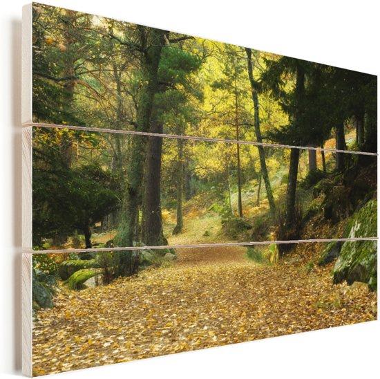 Herfstbossen in het Nationaal park Sierra de Guadarrama in Spanje Vurenhout met planken 60x40 cm - Foto print op Hout (Wanddecoratie)