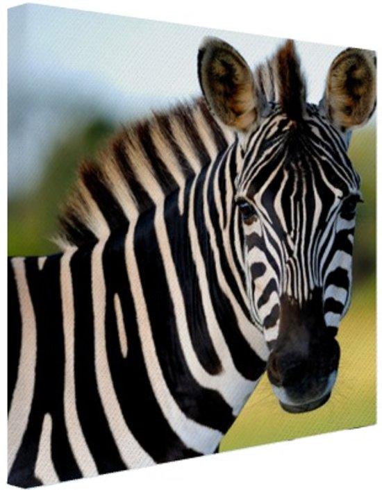 Bol zebra in afrika canvas 50x50 cm foto print op canvas zebra in afrika canvas 50x50 cm foto print op canvas schilderij wanddecoratie thecheapjerseys Gallery