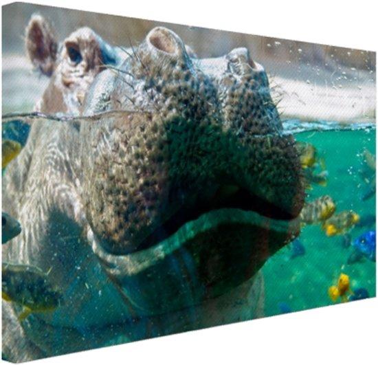 Nijlpaard Close-up met vissen Canvas 120x80 cm - Foto print op Canvas schilderij (Wanddecoratie)