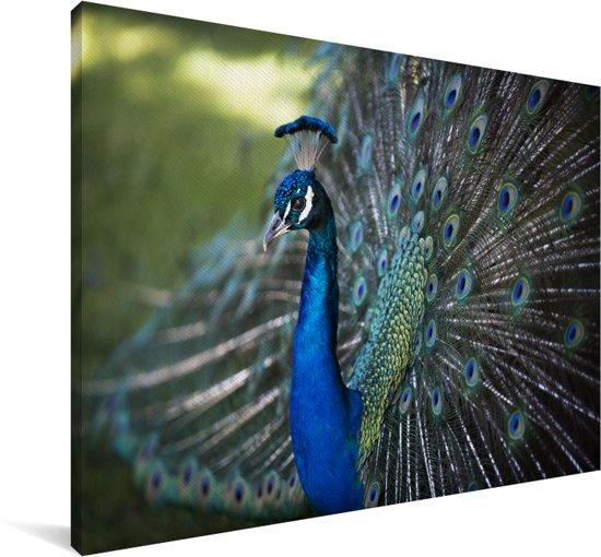 Groene pauw met mooie verenvacht Canvas 140x90 cm - Foto print op Canvas schilderij (Wanddecoratie woonkamer / slaapkamer)