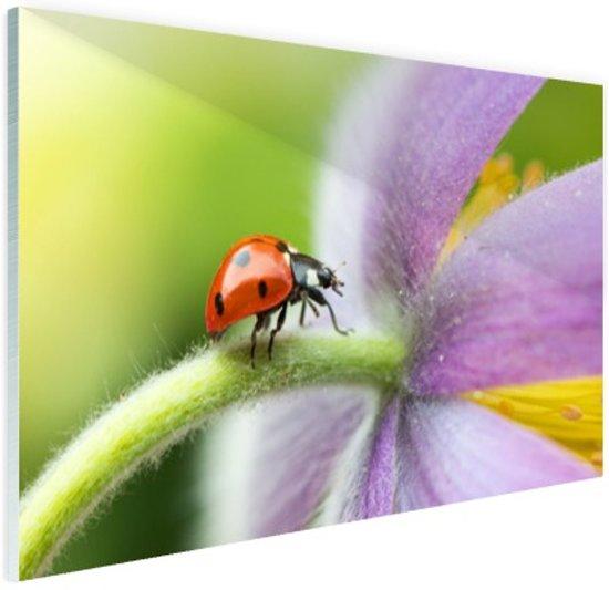 Lieveheersbeestje op een bloem Glas 30x20 cm - klein - Foto print op Glas (Plexiglas wanddecoratie)