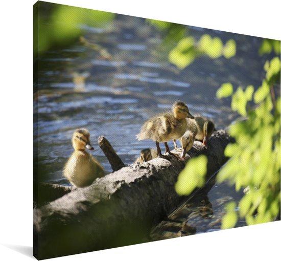 Jonge wilde eenden op een boomstam in het water Canvas 120x80 cm - Foto print op Canvas schilderij (Wanddecoratie woonkamer / slaapkamer)