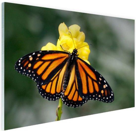 Monarchvlinder Glas 180x120 cm - Foto print op Glas (Plexiglas wanddecoratie) XXL / Groot formaat!