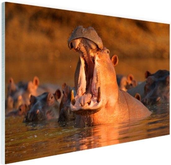 Nijlpaard met open bek Glas 90x60 cm - Foto print op Glas (Plexiglas wanddecoratie)