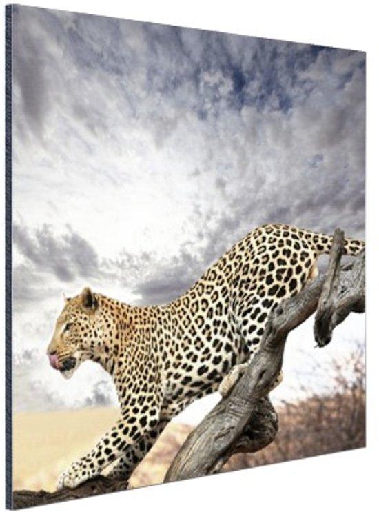 Luipaard op boomstam Aluminium 40x60 cm - Foto print op Aluminium (metaal wanddecoratie)
