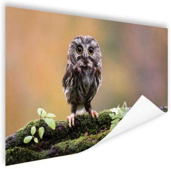Kleine uil Poster 120x80 cm - Foto print op Poster (wanddecoratie woonkamer / slaapkamer) / Dieren Poster