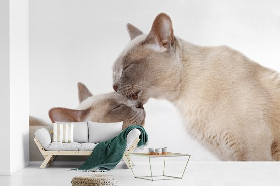 Fotobehang vinyl - Twee schattige Burmees katten knuffelen breedte 595 cm x hoogte 380 cm - Foto print op behang (in 7 formaten beschikbaar)