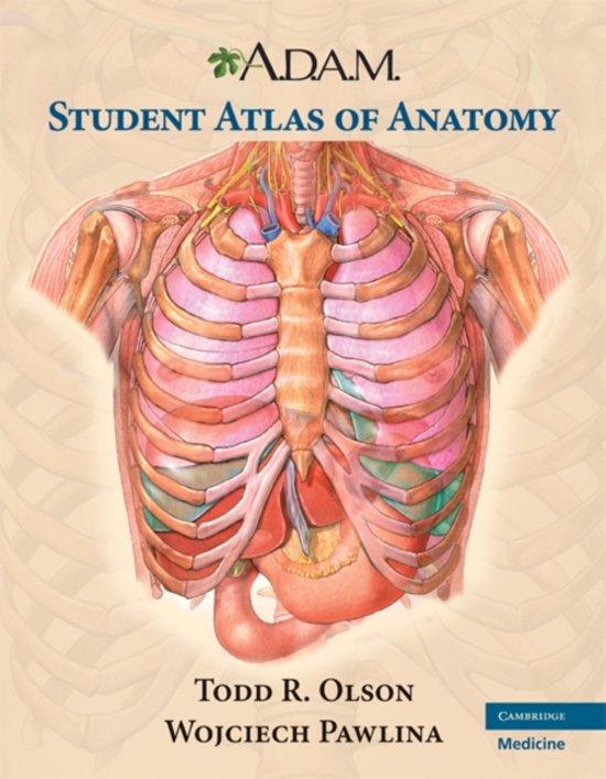 Adam Anatomy | www.imagenesmy.com