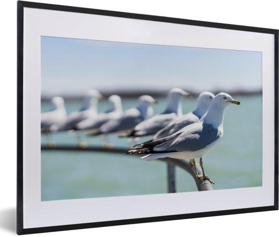 Foto in lijst - Zwerm ringsnavelmeeuwen aan het water fotolijst zwart met witte passe-partout 60x40 cm - Poster in lijst (Wanddecoratie woonkamer / slaapkamer)