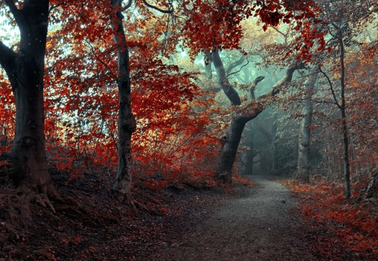 Fotobehang The Red Forest|V8 - 368cm x 254cm|Premium Non-Woven Vlies 130gsm