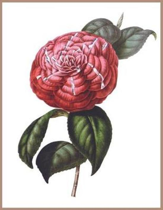 Notebook Red Camellia