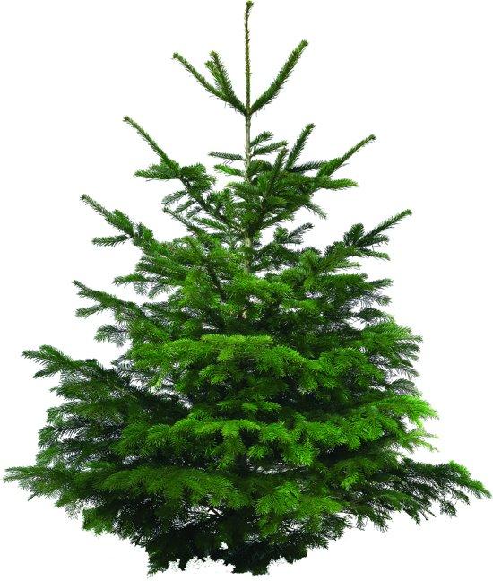 Bol Com Echte Kerstboom Nordmann Excellent 70 100cm