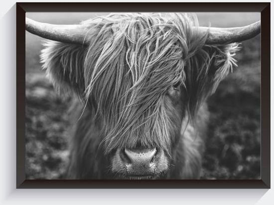 bol   schotse hooglander foto - zwart wit foto - dierenposter - a4