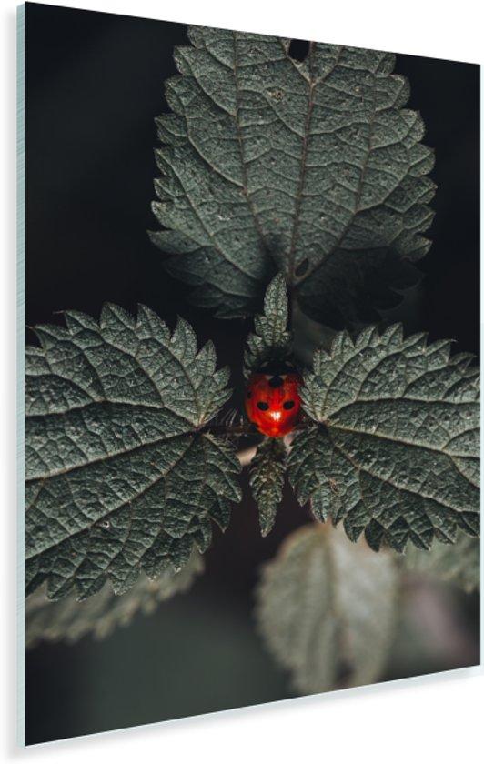 Mooi kleurencontrast tussen lieveheersbeestje en brandnetel Plexiglas 120x180 cm - Foto print op Glas (Plexiglas wanddecoratie) XXL / Groot formaat!