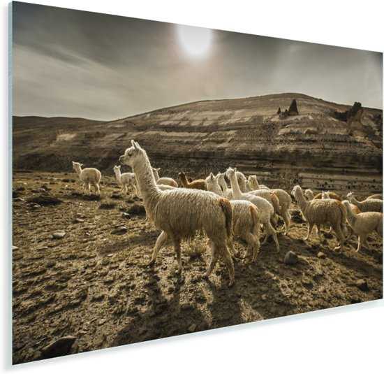Lama's bij de Colca Canyon in Peru Plexiglas 120x80 cm - Foto print op Glas (Plexiglas wanddecoratie)