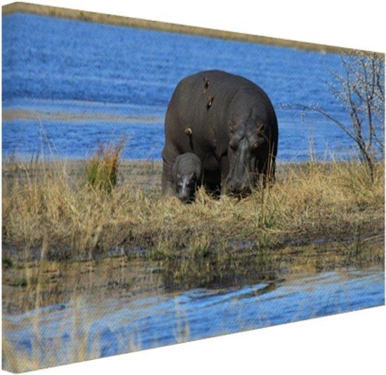 Moeder en baby nijlpaarden Canvas 80x60 cm - Foto print op Canvas schilderij (Wanddecoratie woonkamer / slaapkamer) / Dieren Canvas Schilderijen