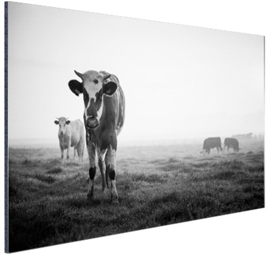 Zwart-wit koeien Aluminium 90x60 cm - Foto print op Aluminium (metaal wanddecoratie)