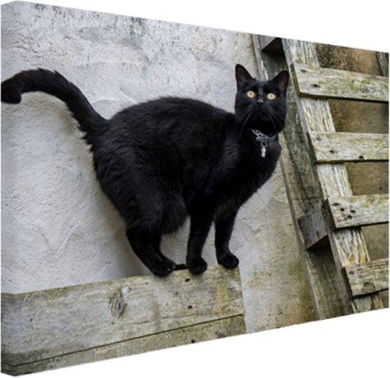 Huiskat staat op een houten plank Canvas 30x20 cm - Foto print op Canvas schilderij (Wanddecoratie)