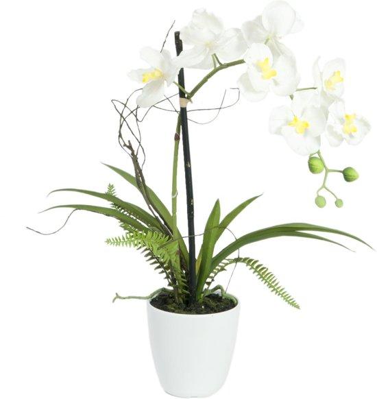 Bloemen In Pot.Europalms Orchidee Kunstplant Met Pot Witte Bloemen 62cm Hoog
