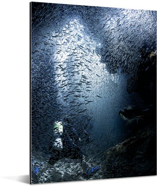 Duiker wordt in de grotten bij Grand Cayman ondergedompeld door vissen Aluminium 30x40 cm - klein - Foto print op Aluminium (metaal wanddecoratie)