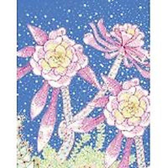 Afbeelding van het spel Succulents Eco-notecards