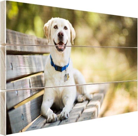 Op Een Bankje.Bol Com Labrador Retriever Op Een Bankje Hout 60x40 Cm Foto
