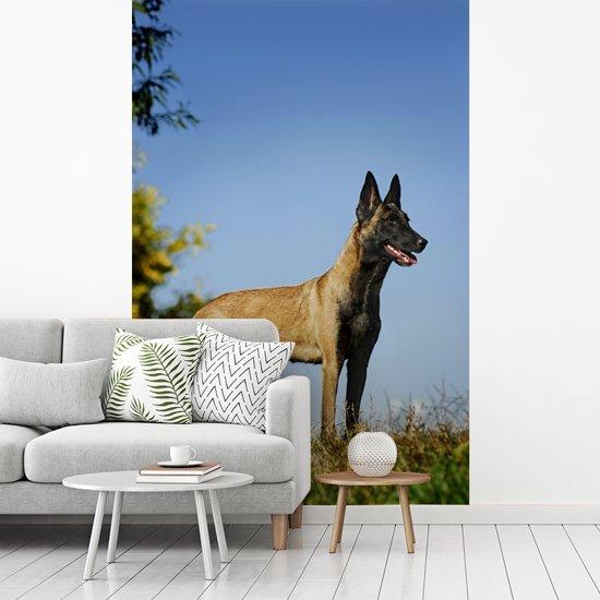 Fotobehang vinyl - Blauwe lucht boven de Mechelse herder breedte 190 cm x hoogte 280 cm - Foto print op behang (in 7 formaten beschikbaar)